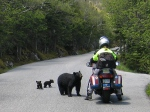 Motocycle with Bear