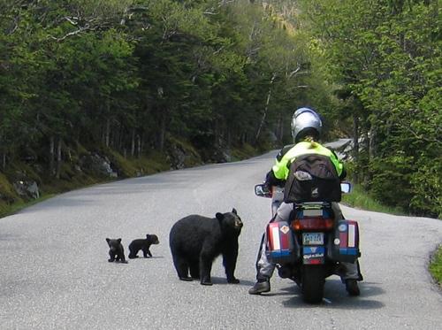 Motocycle with Bear