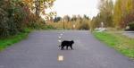 Kucing Nyebrang
