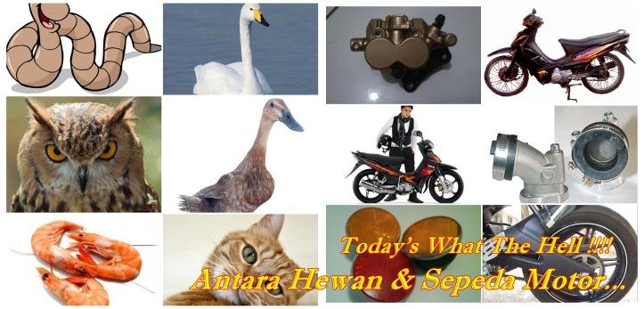 Antara Hewan & Sepeda Motor